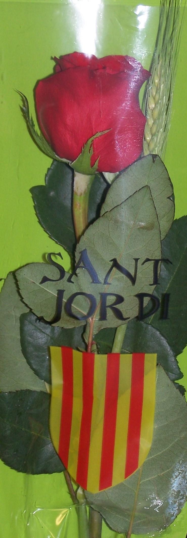 Une rose pour Sant Jordi - Barcelone